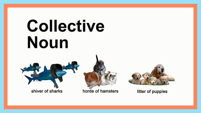 What Are Collective Nouns