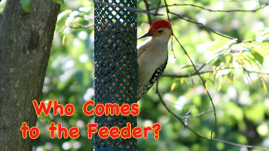 Everyday Science: Who Comes to The Feeder Interactive