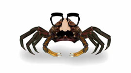 If You Were: spider crab