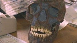 <i>Homo Sapiens</i> Versus Neanderthals