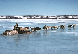 Dog Sled Image