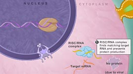 RNAi Explained