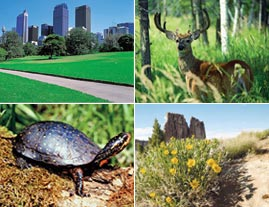 My Environment Images: city, deer, turtle, desert