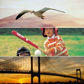 Newton's Law in Action: Seagull, Boy playing baseball, and Suspension bridge