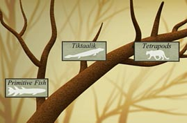 Illustration of Tree of Life with Tiktaalik