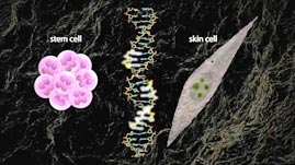 Stem Cells Breakthrough