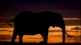 Unforgettable Elephants