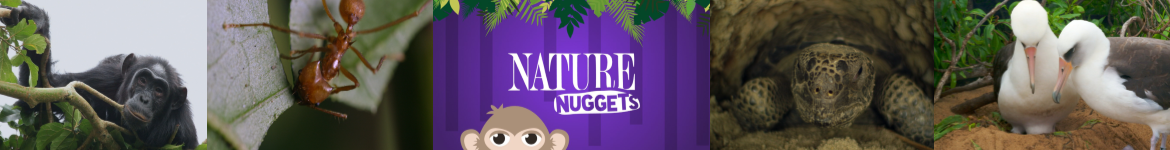 Nature Nuggets