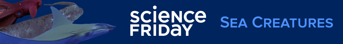 Science Friday: Sea Creatures